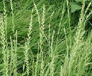 Large-wholesale plant seeds of agricultural products and for agricultural